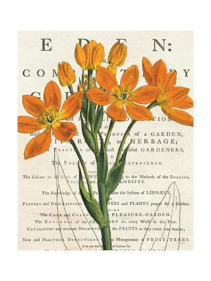 Euphorbia Botany-Sue Schlabach-Art Print