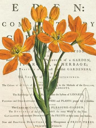 https://imgc.artprintimages.com/img/print/euphorbia-botany_u-l-psv55h0.jpg?p=0