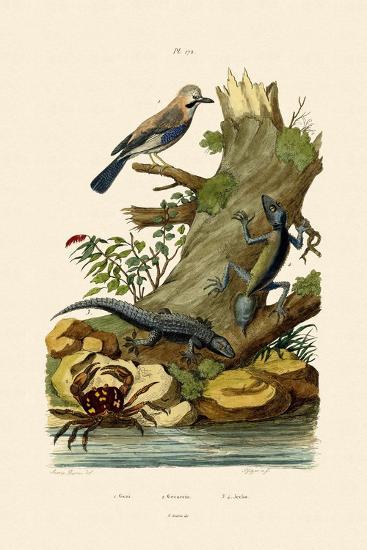 Eurasian Jay, 1833-39--Giclee Print