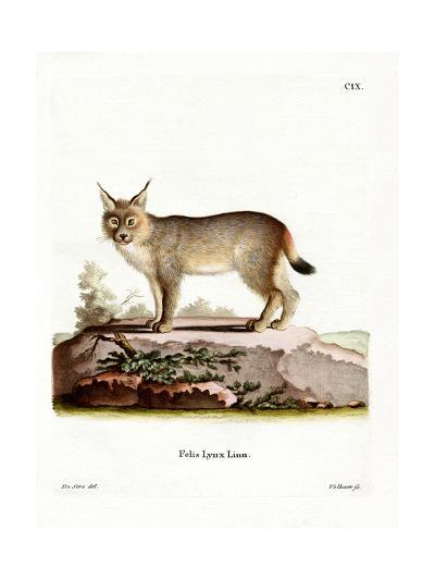 Eurasian Lynx--Giclee Print