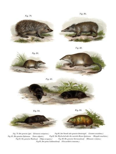 Euroean Hedgehog, 1860--Giclee Print