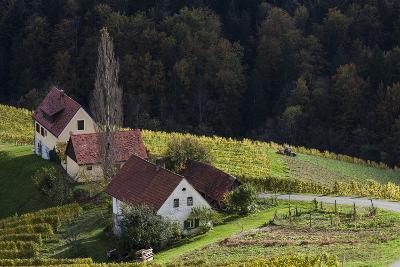 Europe, Austria, Styria, South-Styrian Wine Route, Wine Farm-Gerhard Wild-Photographic Print