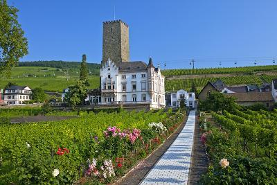 Europe, Germany, Hesse, Rheingau (Area), RŸdesheim on the Rhine-Chris Seba-Photographic Print