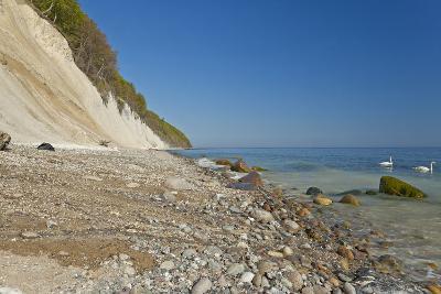 Europe, Germany, Mecklenburg-Western Pomerania, Baltic Sea Island R?gen, Chalk Cliffs, Swans-Chris Seba-Photographic Print