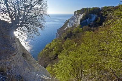 Europe, Germany, Mecklenburg-Western Pomerania, Island RŸgen, Chalk Cliff-Chris Seba-Photographic Print