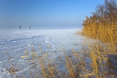 Europe, Germany, Steinhude, Steinhuder Meer, Ice Cover, Reed, Winter-Chris Seba-Photographic Print