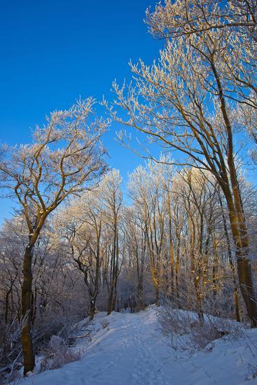 Europe, Germany, Weser Hills, Porta Westfalica, Winter Landscape, Forest Path-Chris Seba-Photographic Print