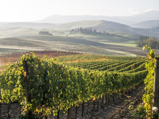 Europe, Italy, Tuscany. Autumn Vineyards in Bright Colors-Julie Eggers-Photographic Print