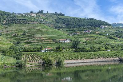 Europe, Portugal, Penajoia Vineyards, Douro River Valley, Douro River-Lisa S^ Engelbrecht-Photographic Print