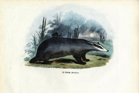 European Badger, 1863-79-Raimundo Petraroja-Giclee Print