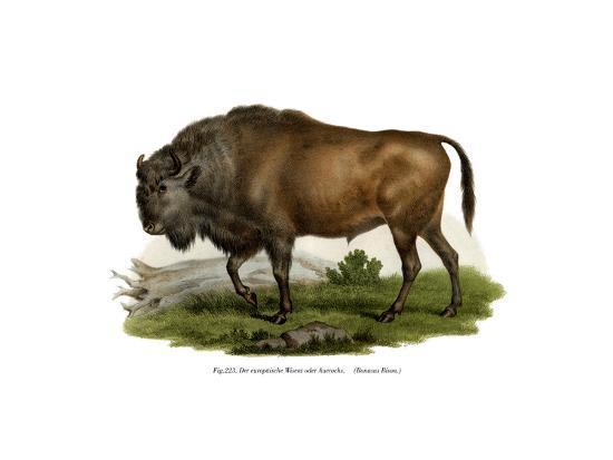 European Bison, 1860--Giclee Print