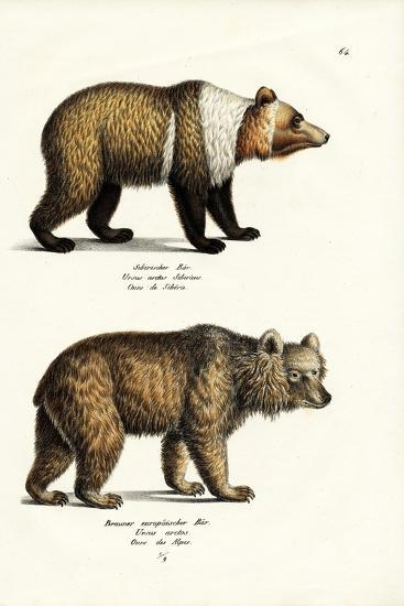 European Brown Bear, 1824-Karl Joseph Brodtmann-Giclee Print