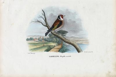 European Goldfinch, 1863-79-Raimundo Petraroja-Giclee Print