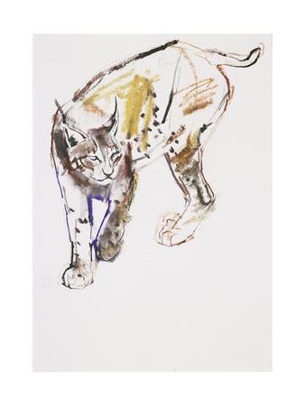 European Lynx-Mark Adlington-Giclee Print