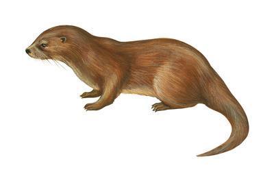 https://imgc.artprintimages.com/img/print/european-otter-lutra-lutra-mammals_u-l-q135huk0.jpg?p=0