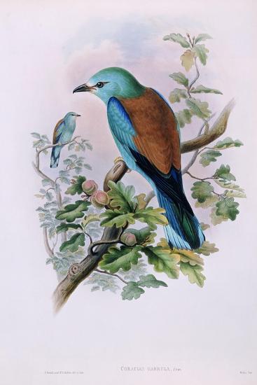 European Roller; Coracias Garrula, 1862-1873 (Hand-Finished Colour Lithograph)-John Gould-Giclee Print