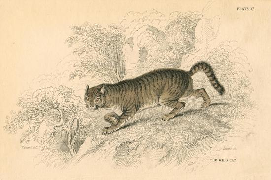 European Wild Cat (Felis Silvestri), 1828--Giclee Print