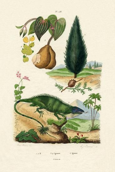European Yew, 1833-39--Giclee Print