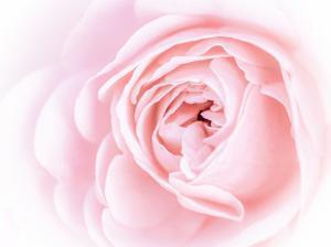 Pretty Pink Blooms I by Eva Bane