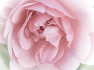Pretty Pink Blooms II by Eva Bane