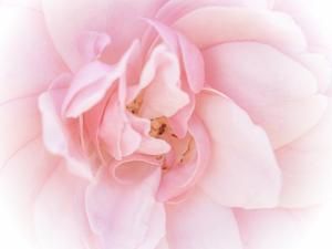 Pretty Pink Blooms III by Eva Bane