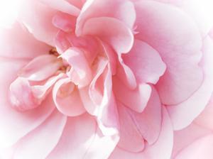 Pretty Pink Blooms IV by Eva Bane