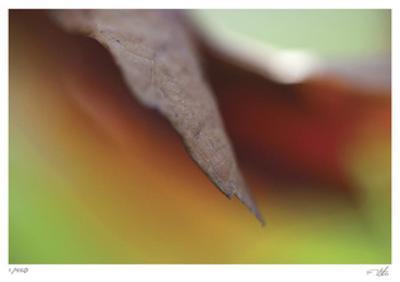 Autumn No 5