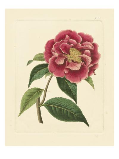 Eva's Garden III--Art Print