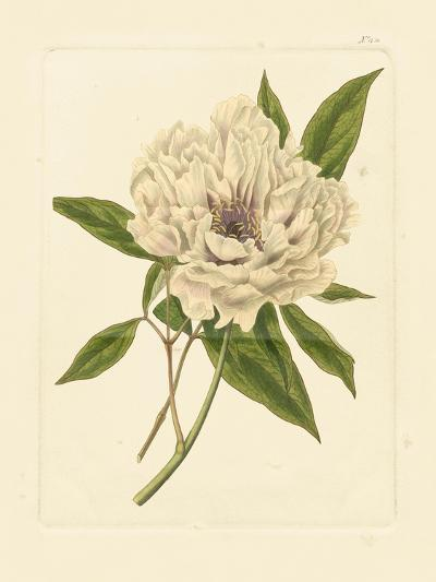 Eva's Garden V--Art Print