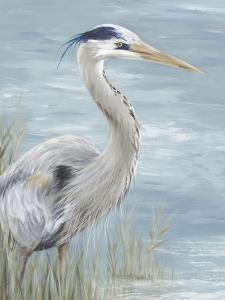 Great Blue Heron Gaze by Eva Watts