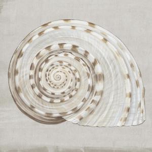 Neutral Shells I by Eva Watts