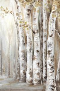Sunset Birch Forest II by Eva Watts