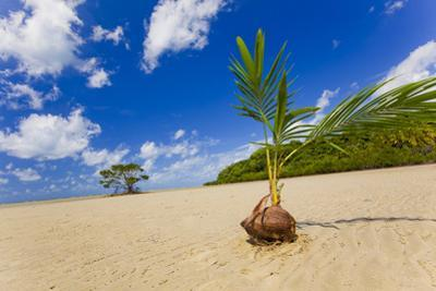 Sprouting Coconut by EvanTravels