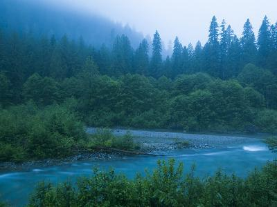 Evening in the Forest, Washington-Ethan Welty-Photographic Print