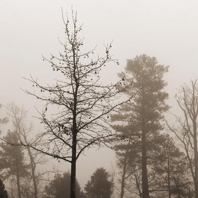 Evening Mist 1 Detail-Marlana Semenza-Art Print