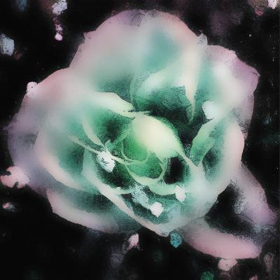 Evening Rose I-Danielle Harrington-Art Print