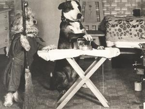 Canine Chores by Everett Collection