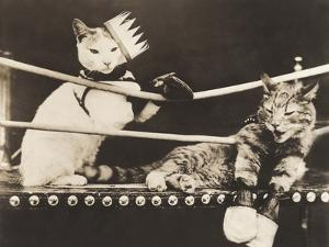 Cat Fight by Everett Collection
