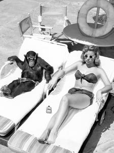 Chimpanzee and a Woman Sunbathing by Everett Collection