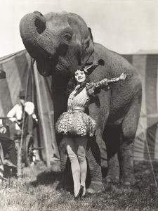 Circus Performer Posing with Elephant by Everett Collection