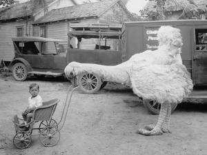 Fake Ostrich Pushing Boy in Stroller by Everett Collection