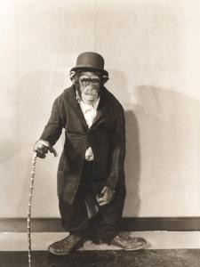 Monkey Dressed in Tight Overcoat and Bowler Hat by Everett Collection
