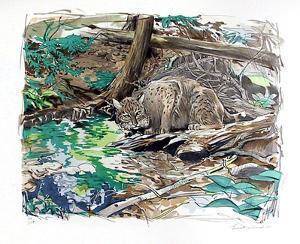 Adirondack Bobcat by Everett Hibbard