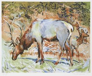 Elk by Everett Hibbard