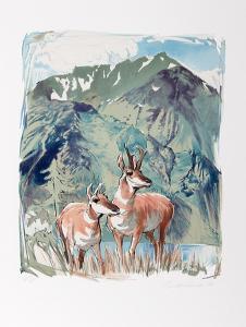 Prong Horn Antelope by Everett Hibbard