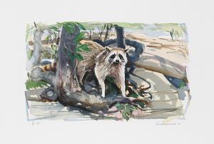 Racoon by Everett Hibbard