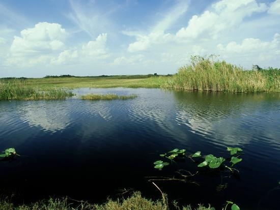 Everglades, Florida-David Tipling-Photographic Print