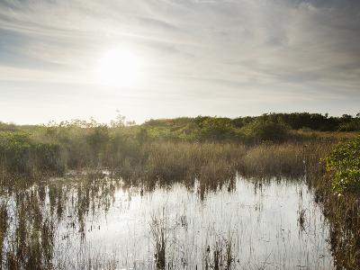 Everglades National Park, UNESCO World Heritage Site, Florida, USA, North America-Angelo Cavalli-Photographic Print