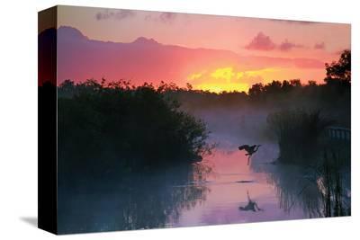 Everglades National Park--Stretched Canvas Print