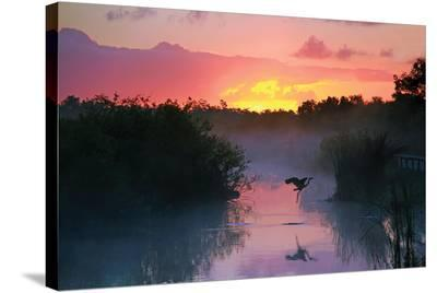 Everglades National Park--Stretched Canvas Print